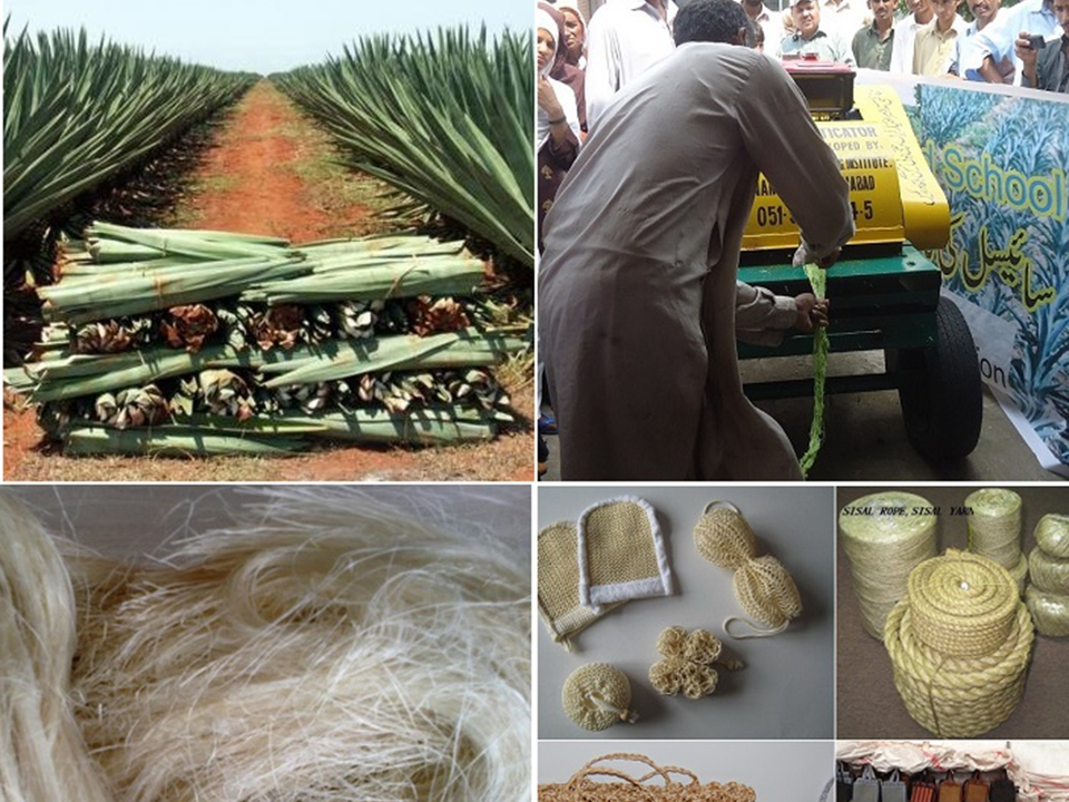 Sisal Value chain and Nursery Development Training